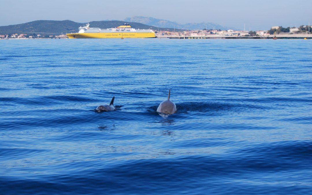 Turismo responsabile, consapevolezza ambientale e cultura del mare