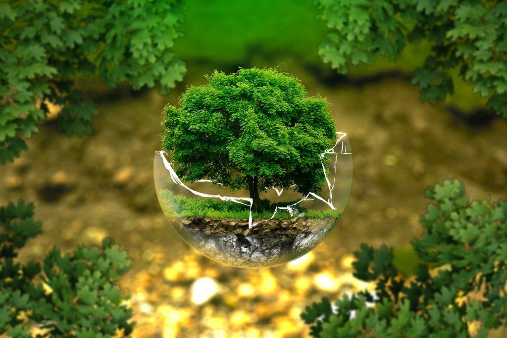 Treedom_Gira_Gira